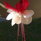 Spring Flower Bloom by Glenn Esau