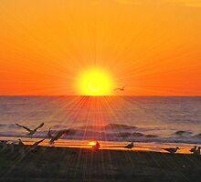 Sunburst by ©Dawne M. Dunton
