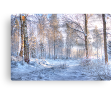 Winter in Forsheda's track I Metal Print