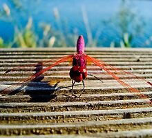 Pink Dragonfly by Soniris