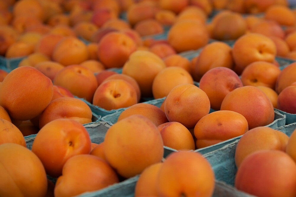 Apricots by the pint by thvisions