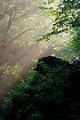Sunshine Streaming Through The Forest by Gene Walls