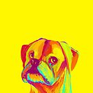 Boxer (Yellow) by shakusaurus