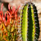Firestick Cactus by sedimages