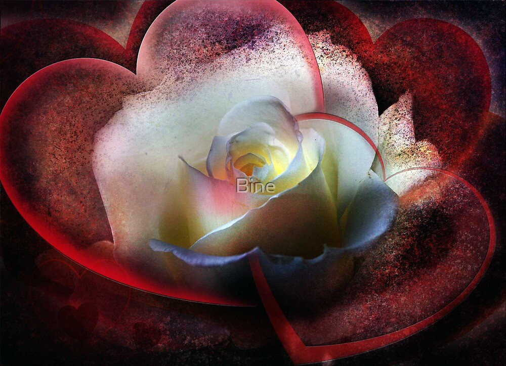 A not so red rose............ by Bine