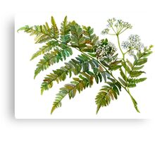 Watercolor fern and flowers Canvas Print