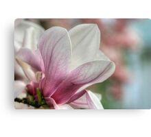 Magnolia Blossom II Canvas Print