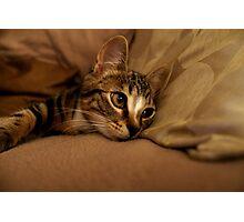 I Dream of Catnip Photographic Print