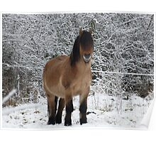 horse in the snow 2 Poster