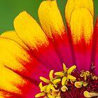 Colorful Flower by Armando Martinez