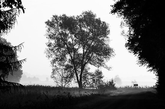 Countryside road by Harald Walker
