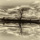 Wonga In Sepia - Wonga Wetlands, Albury NSW - The HDR Experience by Philip Johnson