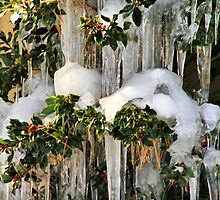 Iced Over by Barbara  Brown
