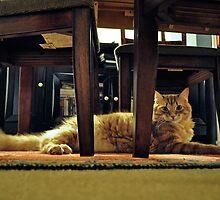 Resting Tabby Cat by emcreates