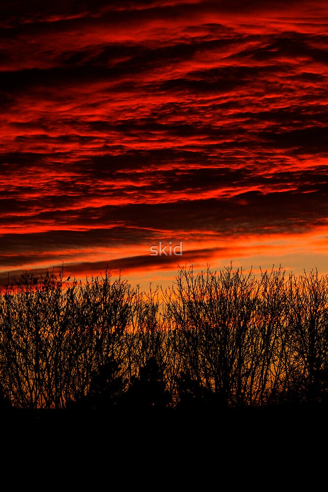 sunset over bare trees  by skid