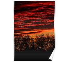 sunset over bare trees  Poster