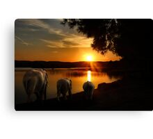 Time for the last drink of the day Canvas Print