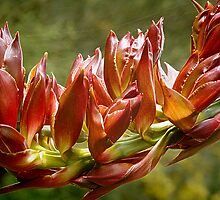 Spear Lily #2 by Bette Devine
