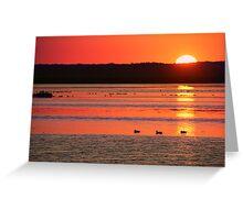 Birding til Sunset Greeting Card