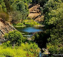 Dights Falls by Leonie Morris