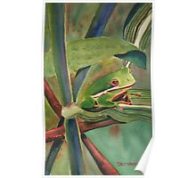 Tell Me a Tale, Tree Frog Poster