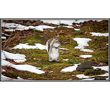 Hooray! The Snow Is Melting! Photographic Print
