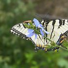 Yellow and Black butterfly  by NATURES FINEST MOMENTS