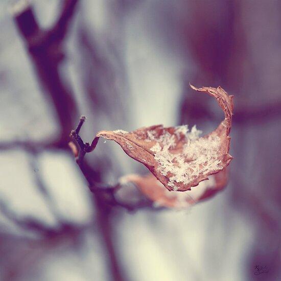 A Delicate Balance by KBritt