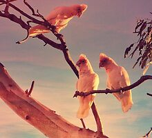 Long Billed Corellas by Lorraine McCarthy by Lozzar Landscape
