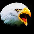 Screaming Eagle by michael montgomerie