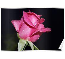 Rosebud in the rain Poster