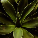 Initials On A Succulent by Larry3