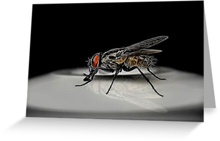 Bad Fly 001 by kevin chippindall