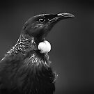 Tui Portrait in Black and White by Robyn Carter