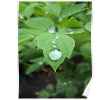 Water on leaf  Poster
