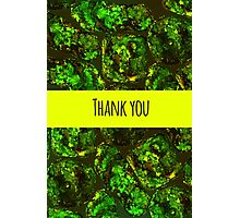 Green moss pattern Photographic Print