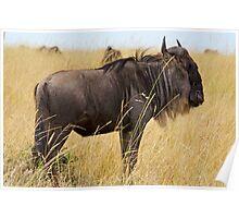 Wildebeest Poster