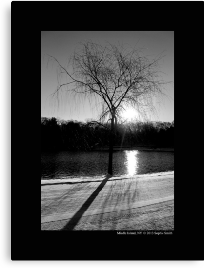 Salix Nigra - Sunrise By The Black Willow On Spring Lake  by © Sophie W. Smith