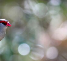 Bird in a tree  Sticker