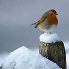 Winter Robin by Kieren