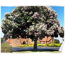 Cape Chestnut near Drouin Anglican Church Poster