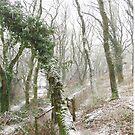 Snowy forest  by Daniel  Taylor