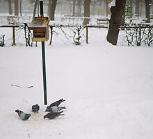 Winter 6 by andrea-ioana