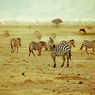Zebras in Serengeti National park by Alina Uritskaya