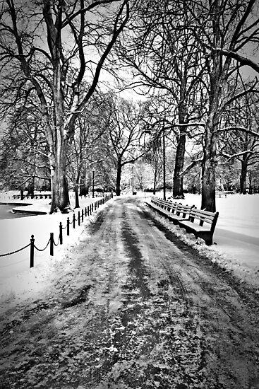 Winter Morning in the Boston Public Garden by Susan Drysdale