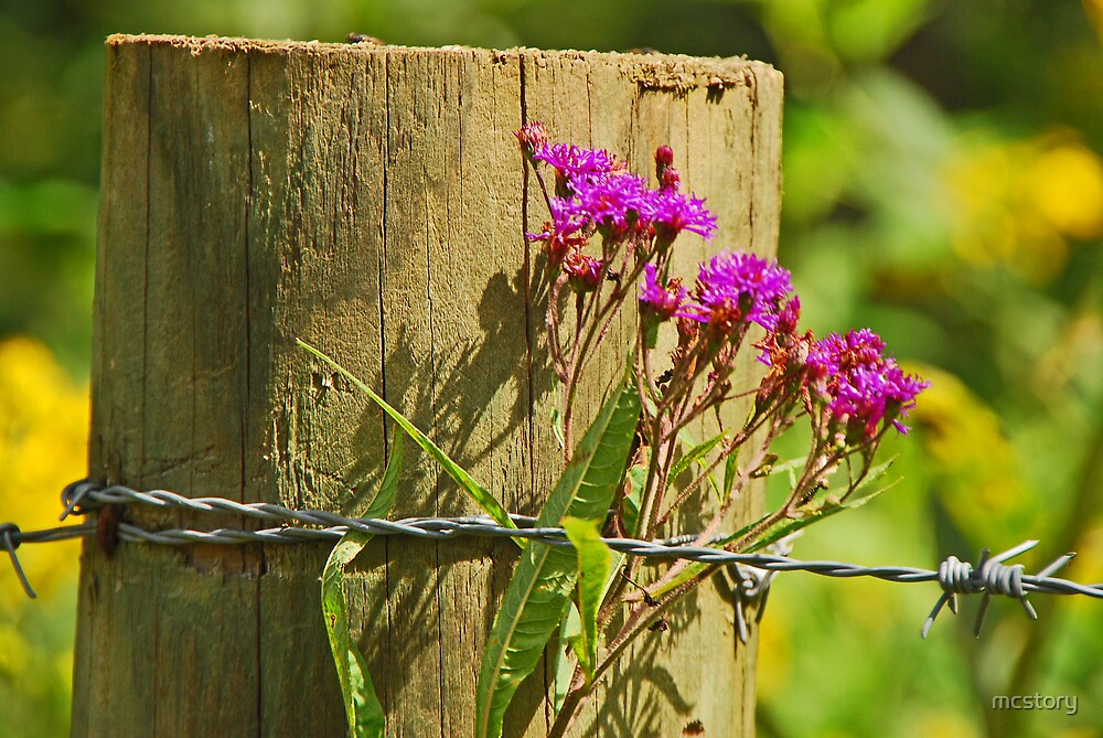 Behind The Fence by Mary Carol Story