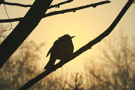 Bird Silhouette by ienemien