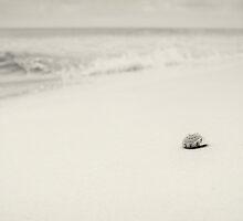 Salt Air by shuttersuze75