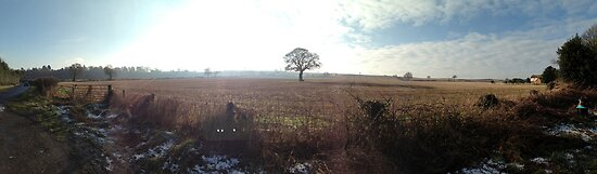 Wintery Cold Morning in the Midlands - Panoramic  by Pickers