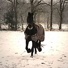 Frisian Horse in  the Snow by ienemien
